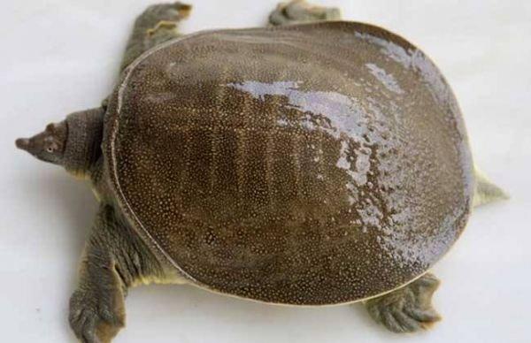王八和乌龟的区别